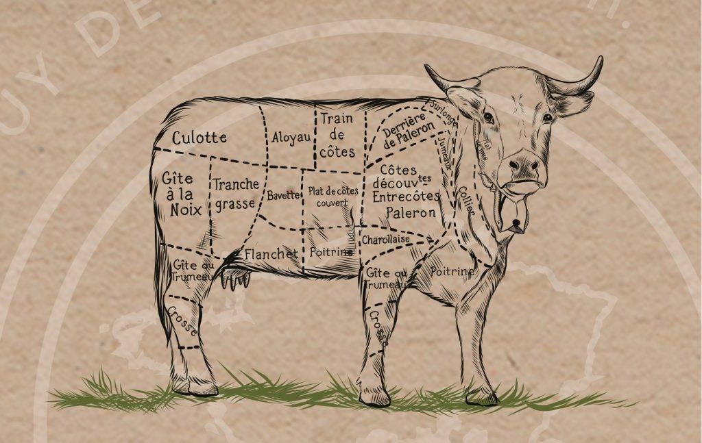 vache-schema-2