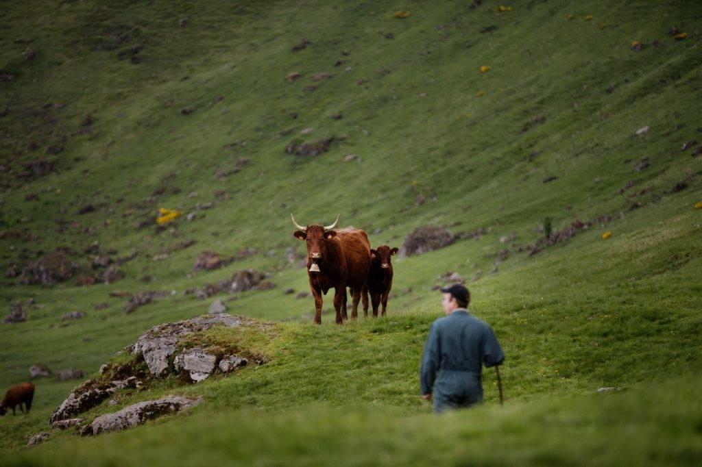 1.2.2 - Vache dans paysage
