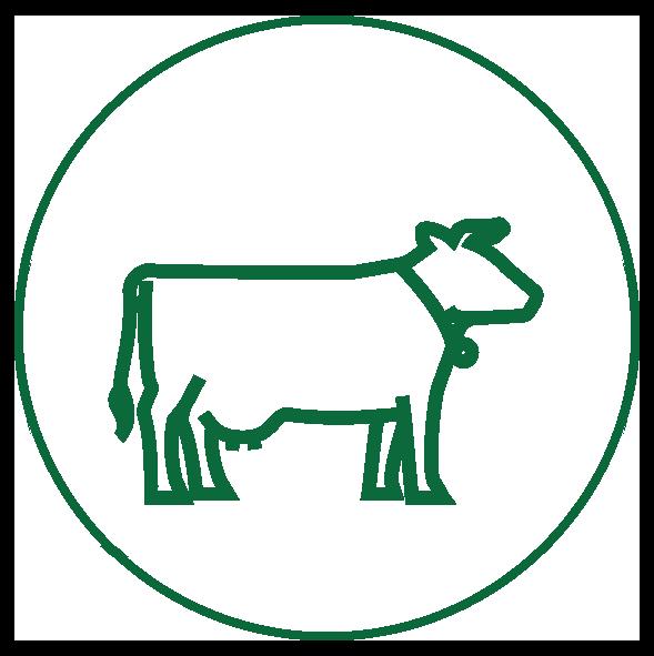 vache_vert